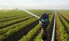 دانلود تحقیق آبیاری در زراعت سیب زمینی