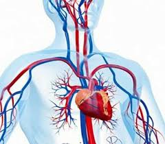 پاورپوینت فشار خون